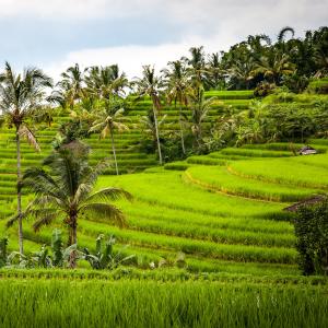 Бали - там, където Хората искат земята им да остане Земен рай